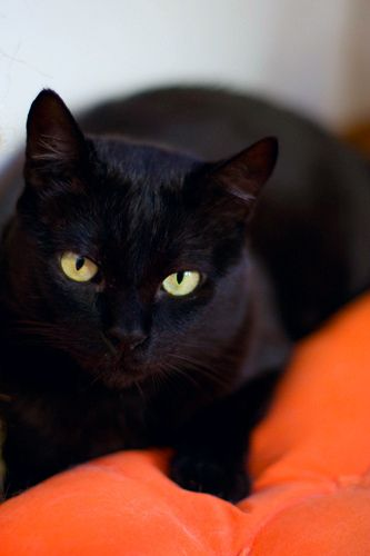 Black cat. Just gorgeous. Just look at it.