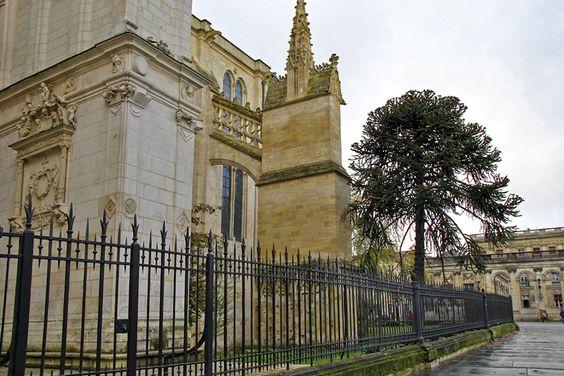 Вид на стены собора