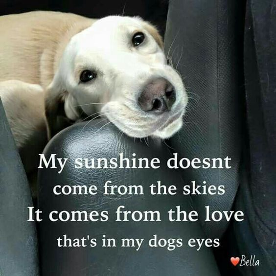 My sunshine doesn't come from the skies. It comes from the love that's in my dogs' eyes.