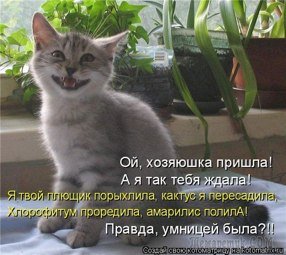 """""""Коты и др."""" (3-я часть)"""