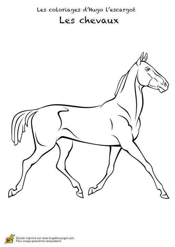 Dessin d 39 un puissant cheval de course sans ses quipements - Dessin cheval de course ...