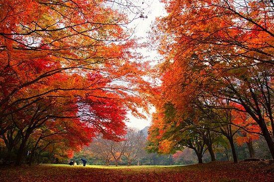 Núi Naejangsan khi mùa thu tới với những rặng cây lá đỏ