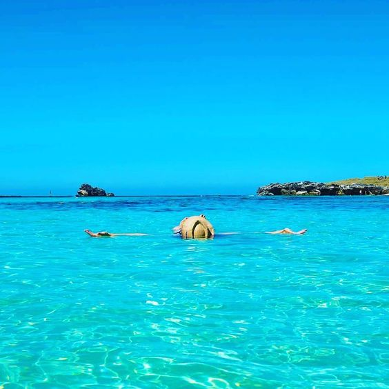 Relaxation rotto style  #rottnestisland #rotto #rottnest #paradise #swiming #beach #crystalclearwater #potd #travelling #travelblogger #diving #snorkeling #sharks #fish #coralreef #paradise #like4like #instapic #instafamous #holiday #luxurylifestyle #luxurylife #perth #westernaustralia #picoftheday #fitness #fitspo #followme by bevanlesheafitness http://ift.tt/1L5GqLp