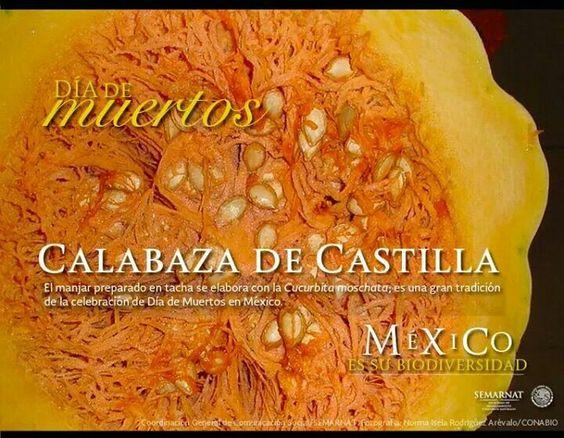 Calabaza de Castilla