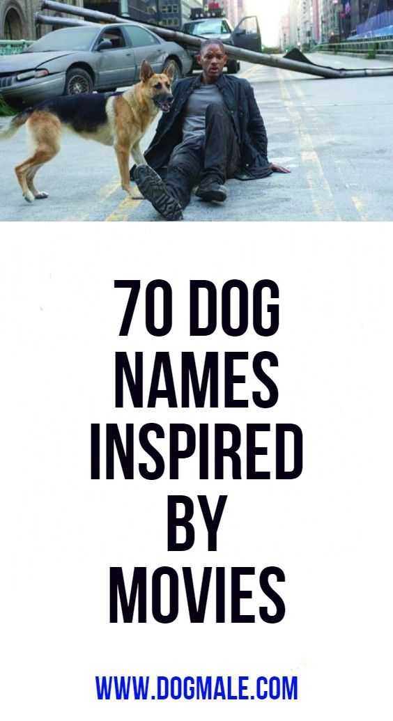 70 Dog Names Inspired By Movies Dog Names Puppies Names Female