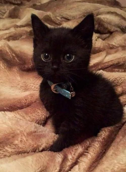 Kittens Versus Adult Cats How To Choose Which Is Right For You Kittens Cutest Kitten Adoption Cute Cats
