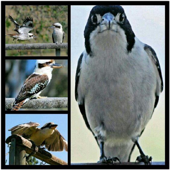 "@charlie261's photo: ""Fathers day birds :-) #photoadayseptembird #yournest #abird #birds #birdsnestonline"""