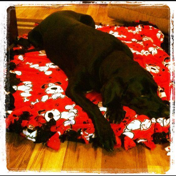 Tie Blanket Dog Bed