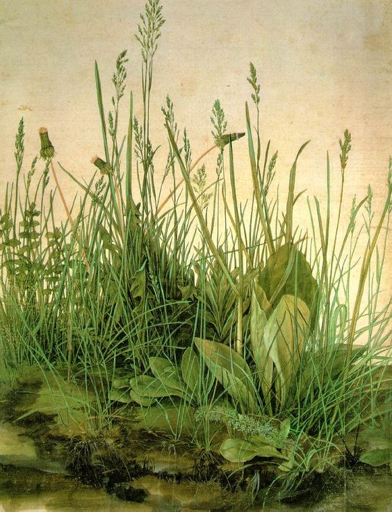 Albrecht Dürer;  The Large Turf   1503 ; Watercolor and gouache on paper, 41 x 32 cm; Graphische Sammlung Albertina, Vienna: