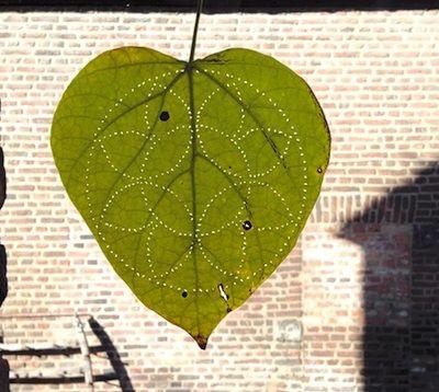 Piquer les feuilles d'automne @ Le Petit Manuel