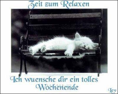 katzen schones wochenende