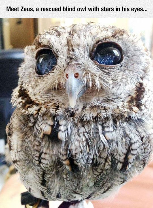 Zeus, a rescued blind owl with stardust eyes