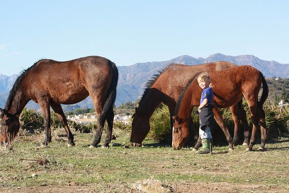 Mijas campo ... horses roam freely in the countryside