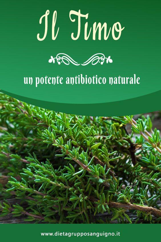 Il Timo Un Potente Antibiotico Naturale Erbe Naturali Rimedi Naturali Piante Medicinali