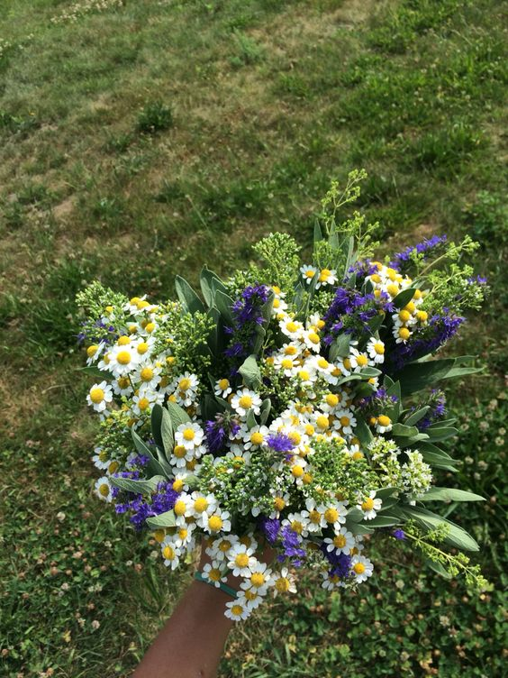Bouquet of sage, feverfew, summer savory, and oregano flower.