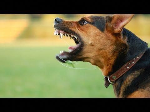 6 Best Free Online Dog Training Video Courses Tips From Pro