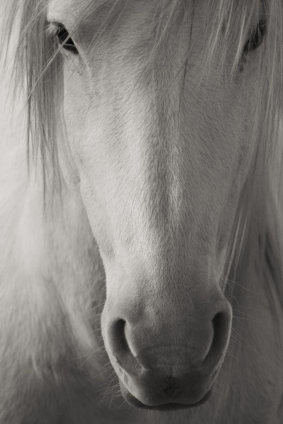 Cavalos e Semelhantes by Daniel Alho /