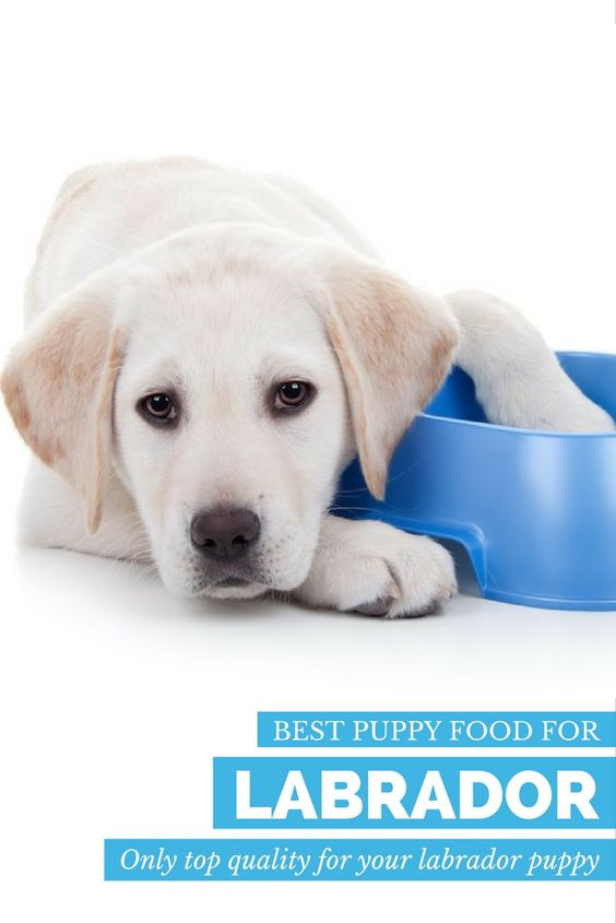Through our Labrador puppy food reviews, you'll discover the three best puppy food brands to keep your Labrador puppy healthy and strong during the formative puppy years.