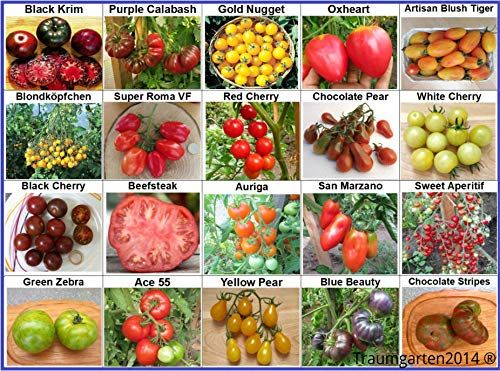 BESONDERS und FEIN! Saatgut Tomate Cherokee Tiger Large 10 Samen