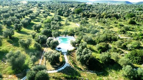 Swimming pool between Olive trees