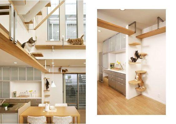 Casa japonesa projetada para gatos