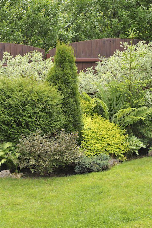 7 best NB shrubs trrees images on Pinterest Backyard ideas