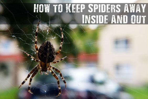 How to keep spiders away inside and out prepping for Home remedies to keep spiders away