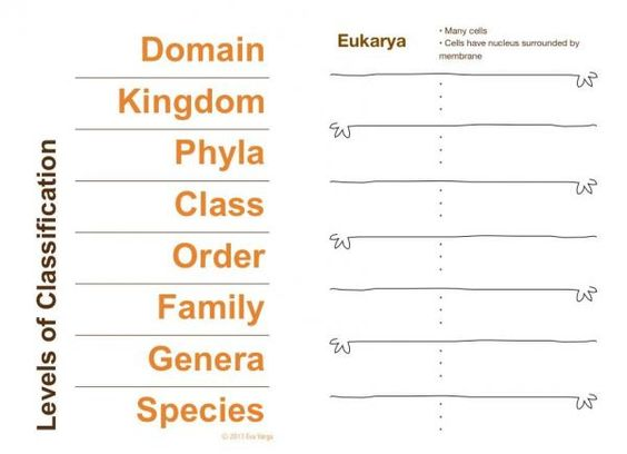 I introduce the topic of scientific classification and how to use a dichotomous key.
