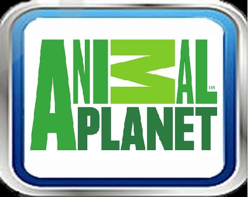 Ver Animal Planet Gratis En Vivo Por Internet With Images Tv