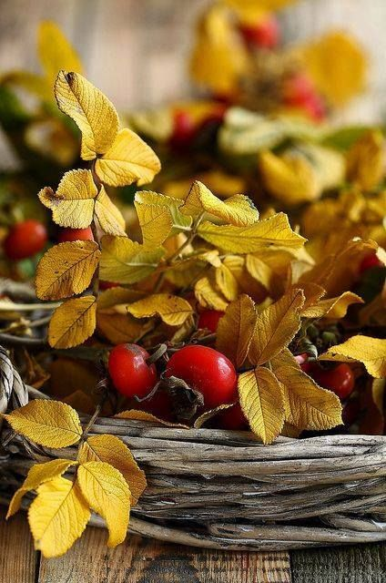 Grape vine wreaths, Autumn berries and leaves...nice