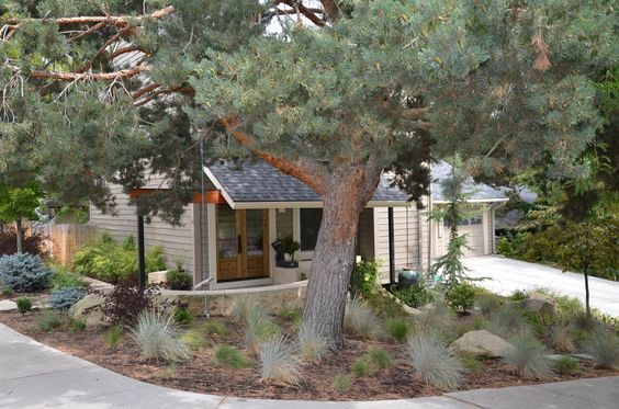 The homeowners wanted to protect the original trees.  We updated the landscape with xeroscape and traditional landscape.