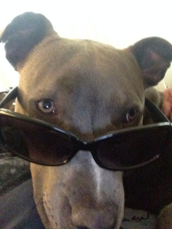 Cool dog #olaf