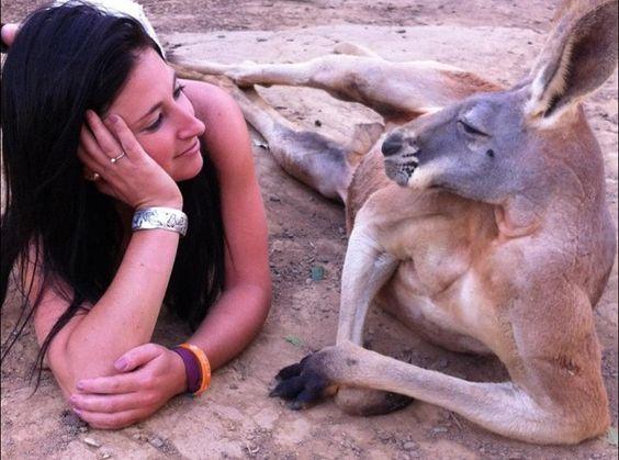 Mi Universar: El romance del canguro