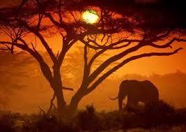 África - Frases e imagens