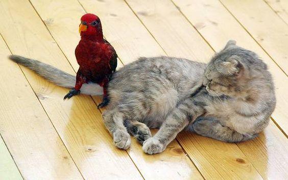 Animales Descansando En Los Lugares Menos Esperados