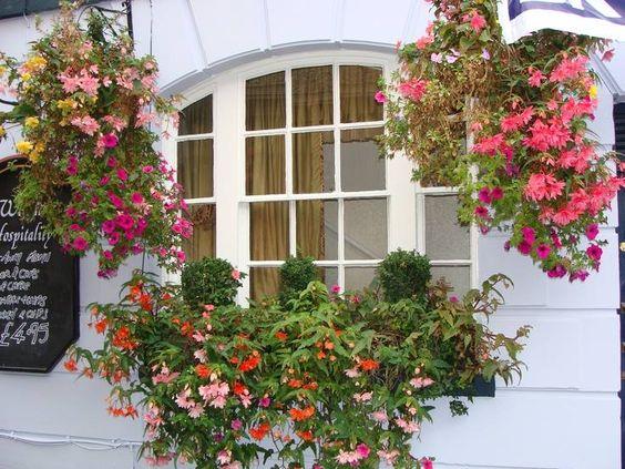 janela e flores