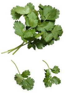How to Freeze or Dry Cilantro...since I have a bumper crop this year!