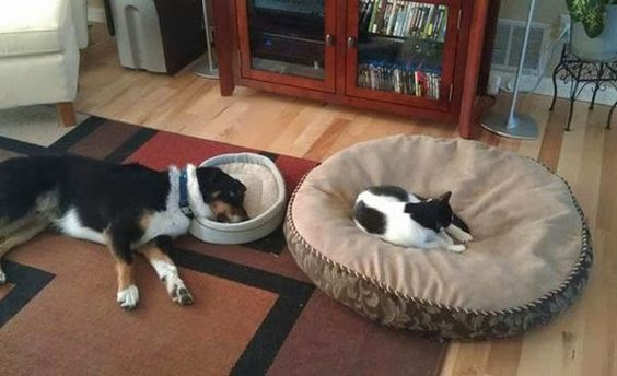 Just another episode of cat vs dog! :)    _____________________ www.fixwomenshealth.com