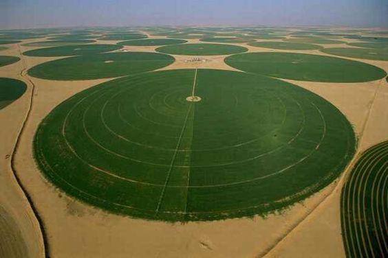 Campos do Planeta Terra Arábia Saudita - Campos redondos. A fonte de água situa-se no centro de cada campo.