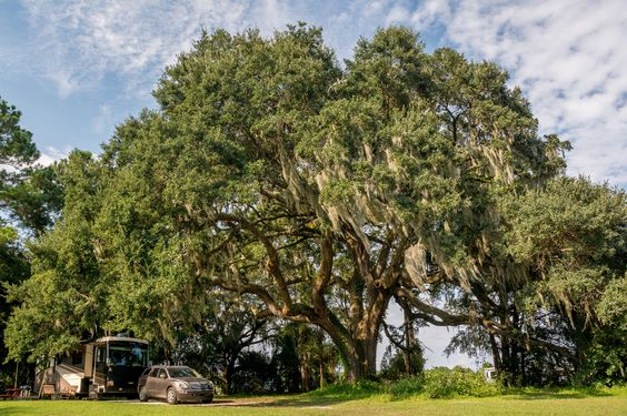 https://flic.kr/p/AzfzGG | Majestic Campsite at Red Gate Farms near Savannah | Our campsite at Red Gate Farms, number B-1. There are two others in this section, immediately to the left of our rig. This is by far the best one at Red Gate.