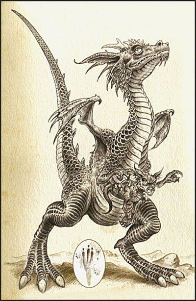 Dragon Marsupial