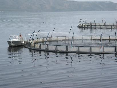 Challenges of fish farming