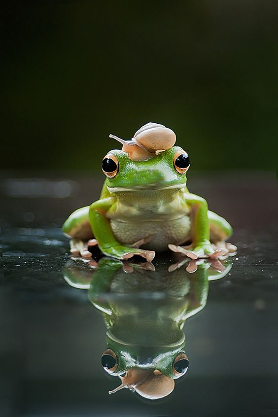 Frogs friendship and snails on pinterest for Frog transformation