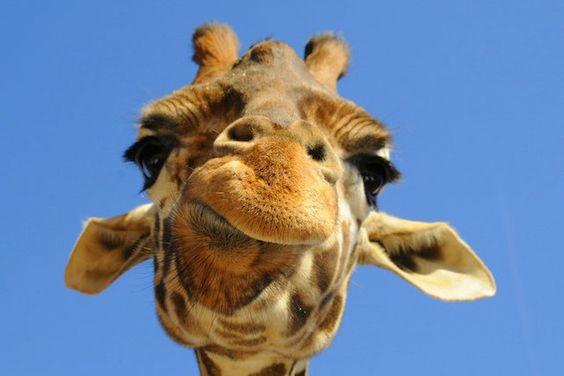 girafinha <3