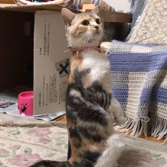 まるで人 猫が2本足で直立する ミーアキャット ポーズとは ねこのきもちweb Magazine ミーアキャット 猫 ねこ
