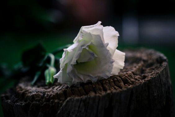 Snow White in the woods #flower #white #gardening #mystical