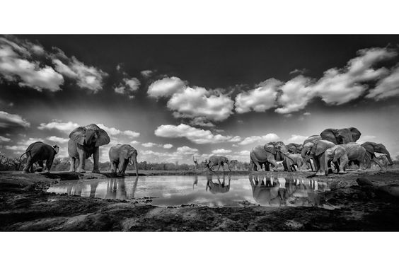 Chris McLennan Photography – travel, wildlife and adventure photographer.» #WildlifeTourism