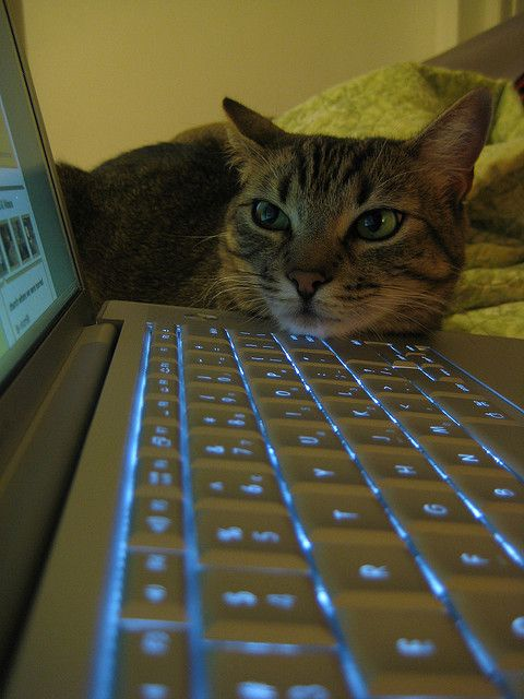 """Caturday pic: """"Stop working nao"""" TUAW - The Unofficial Apple Weblog"""