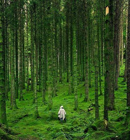 The breathtaking Scottish Highlands!