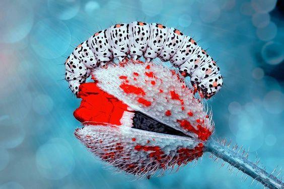 Post  #: Hoje (03/09) é o Dia do Biólogo. Parabéns para ess...